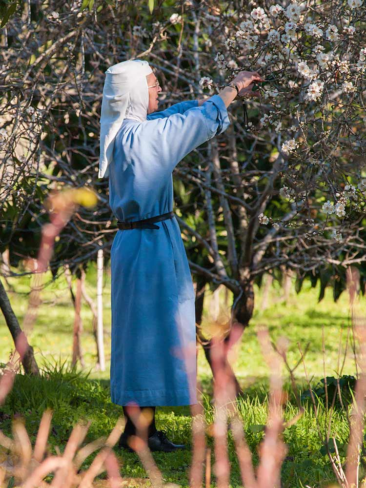 benedictines-abu-gosh-jardiniere